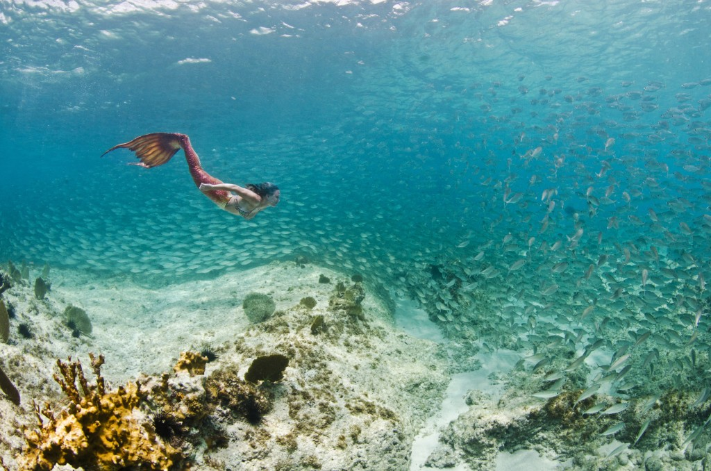 Grand Cayman Underwater Photography